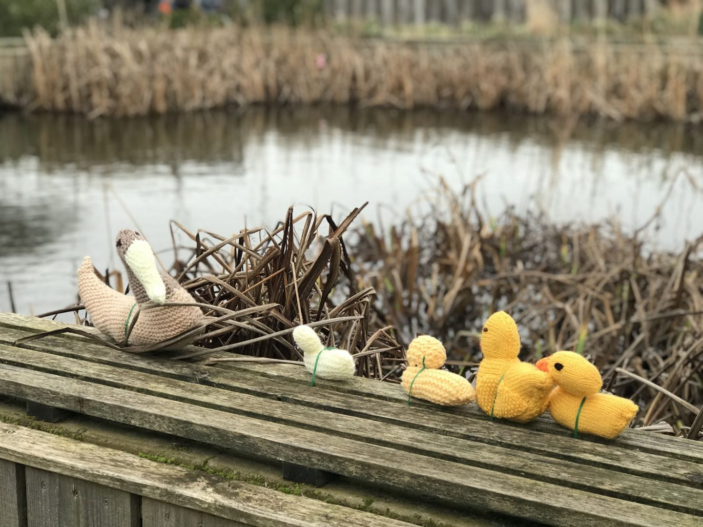 The Yarn Bombers have struck at RSPB Saltholme