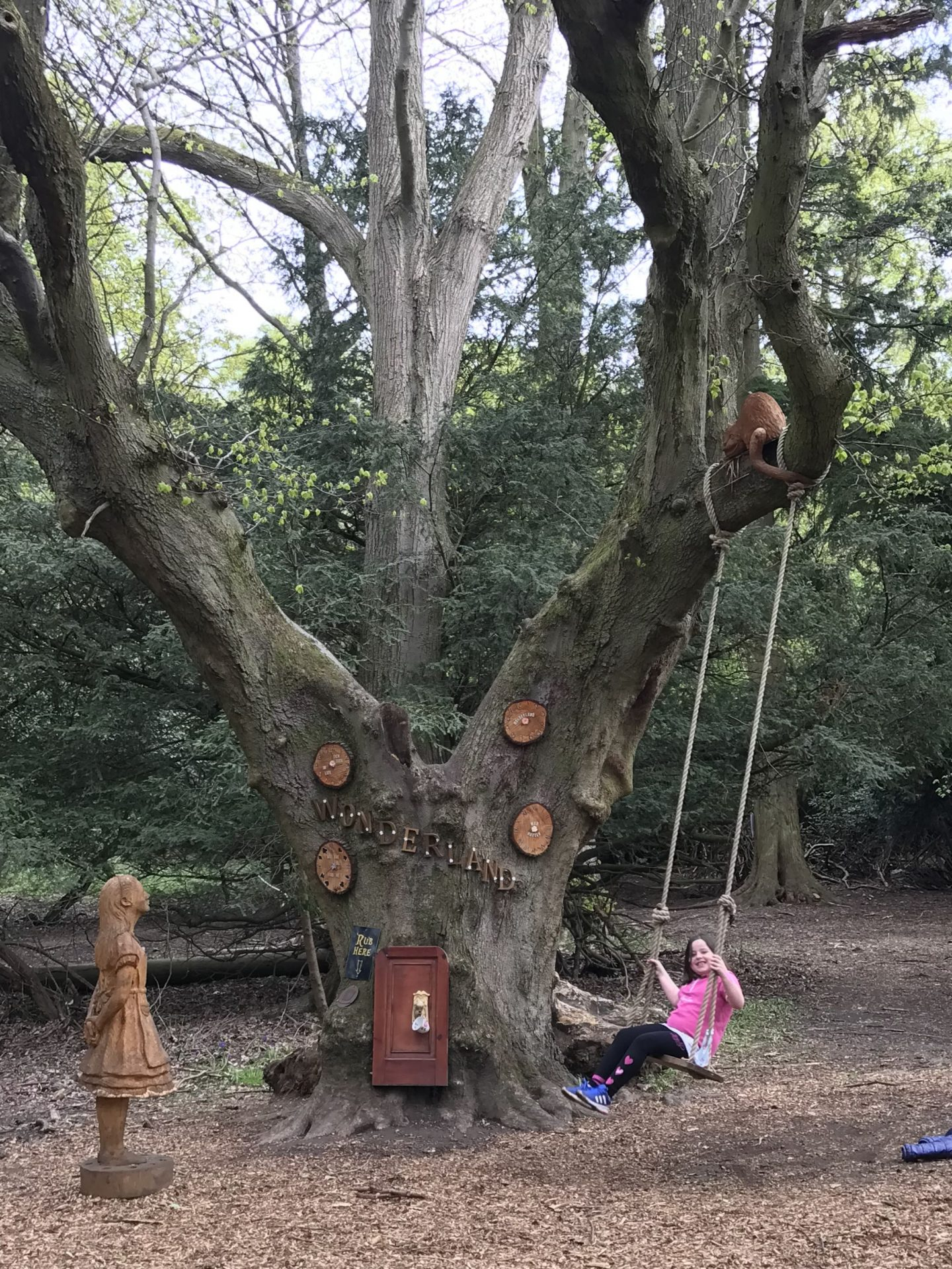 Beamish Hall's Adventure Woodland