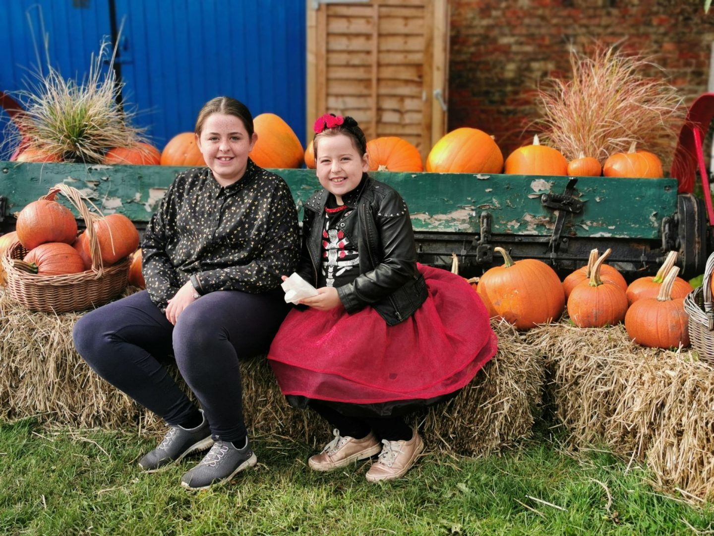 Pumpkin Picking at Spilmans, Thirsk
